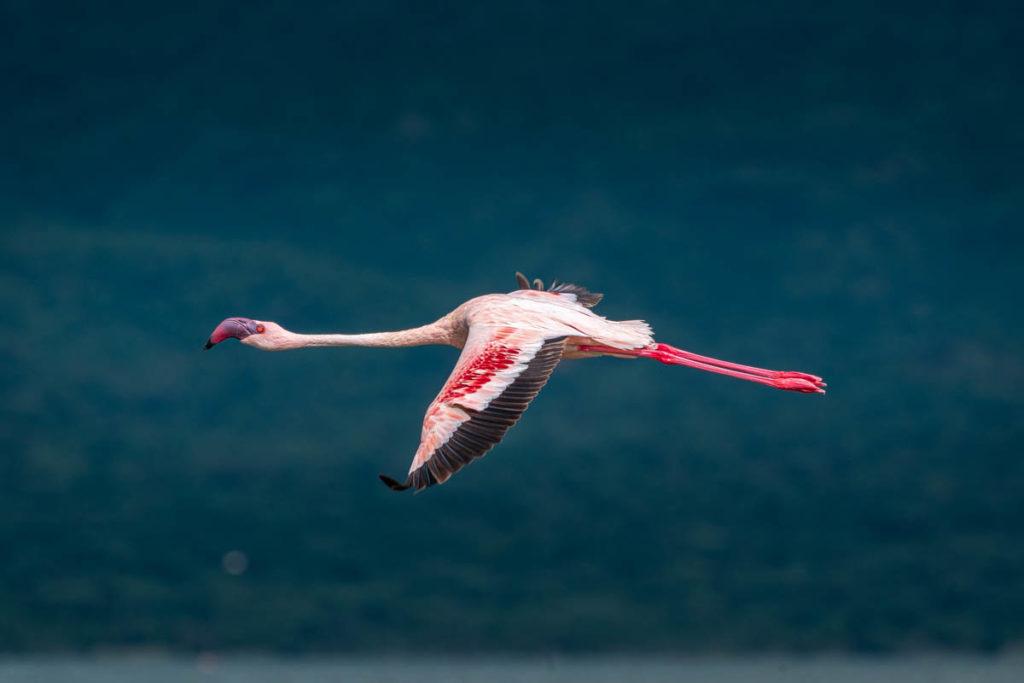 Tag 4 - Flamingos, überall Flamingos 12