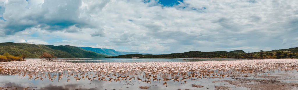 Tag 4 - Flamingos, überall Flamingos 9