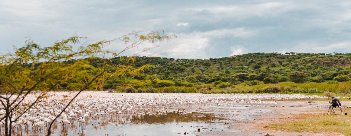 Tag 4 - Flamingos, überall Flamingos 47