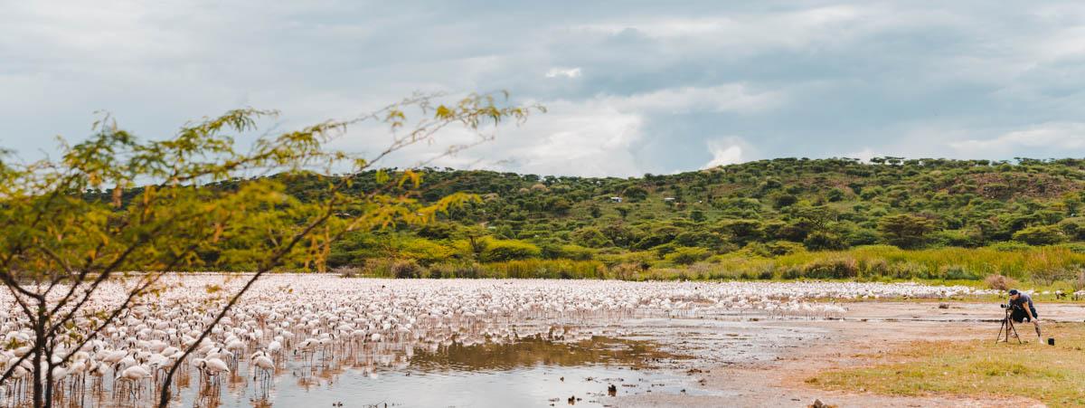 Tag 4 – Flamingos, überall Flamingos