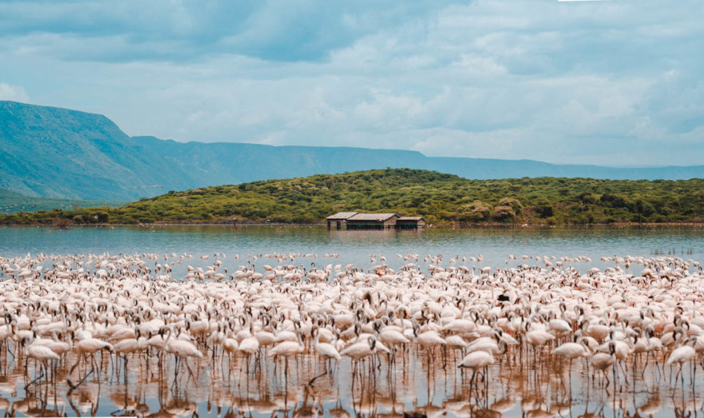 Tag 4 - Flamingos, überall Flamingos 10