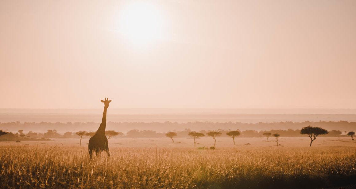 Tag 6 - Safari durch die Masai Mara 40