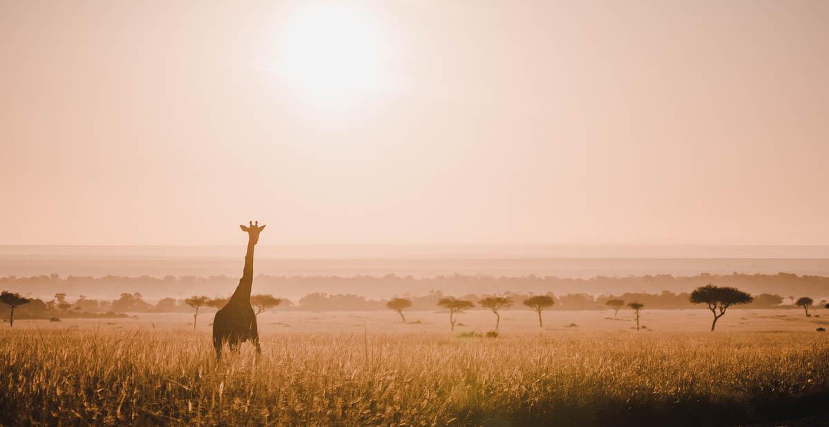 Tag 6 – Safari durch die Masai Mara