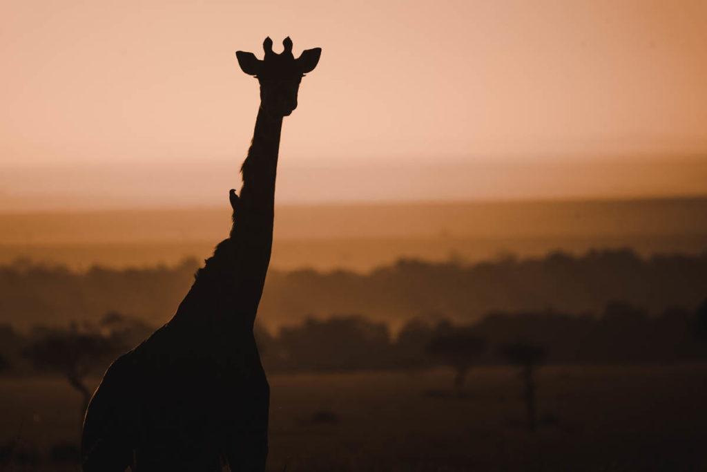 Tag 6 - Safari durch die Masai Mara 42