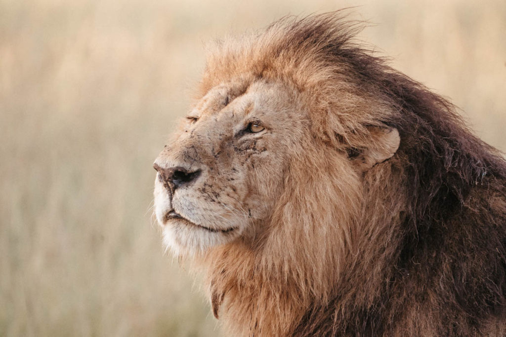 Tag 6 - Safari durch die Masai Mara 43