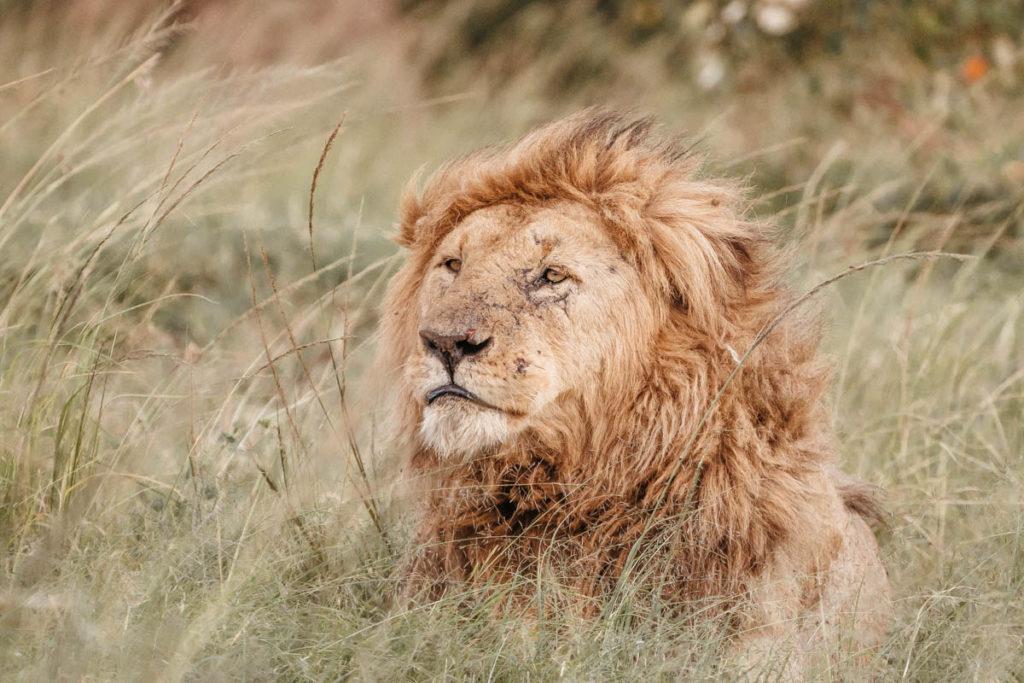 Tag 6 - Safari durch die Masai Mara 11