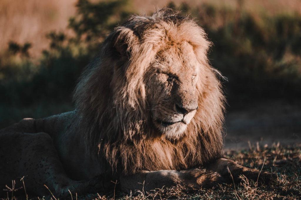 Tag 6 - Safari durch die Masai Mara 12