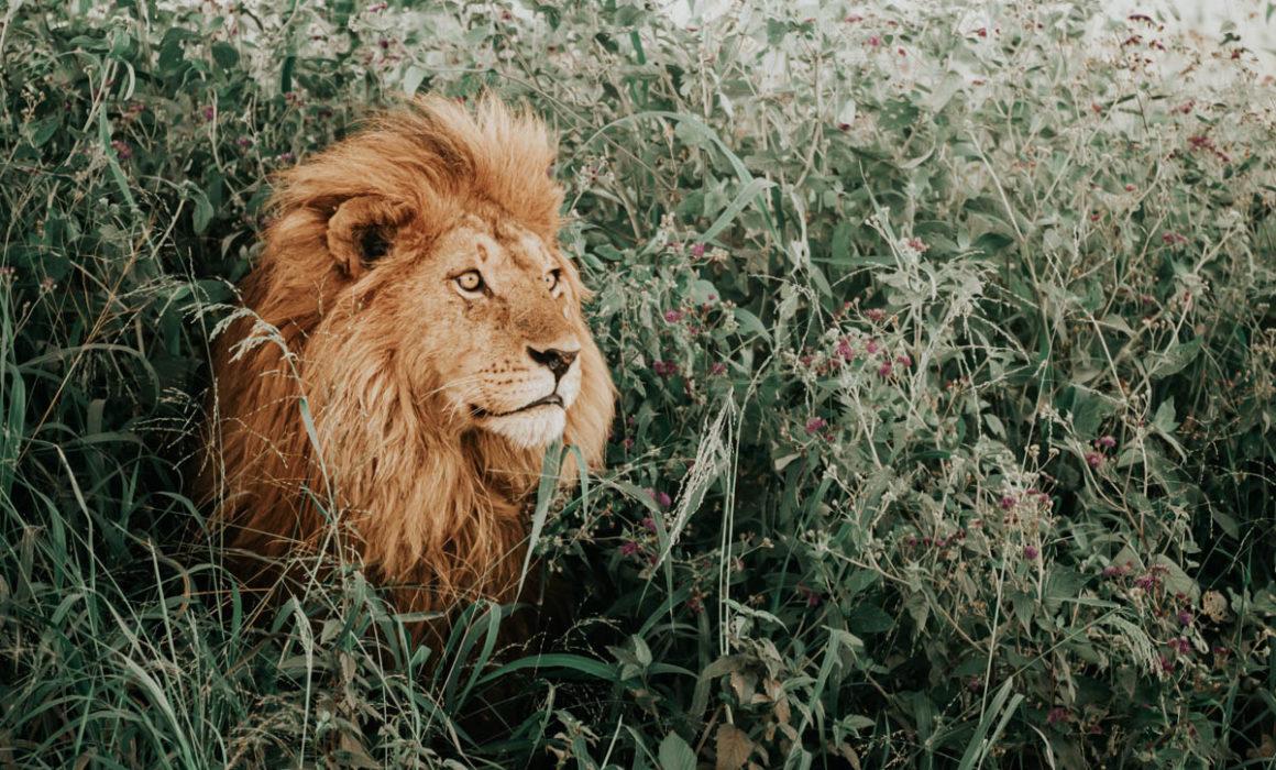 Tag 9 - Schläfrige Löwen 1
