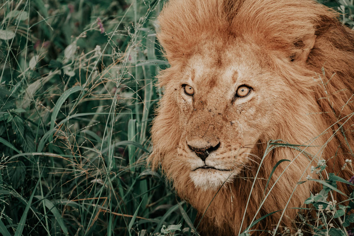 Tag 9 - Schläfrige Löwen 11