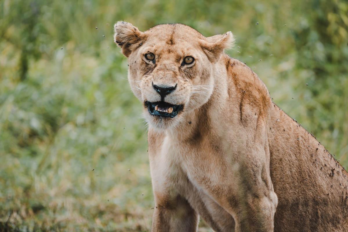 Tag 9 - Schläfrige Löwen 9