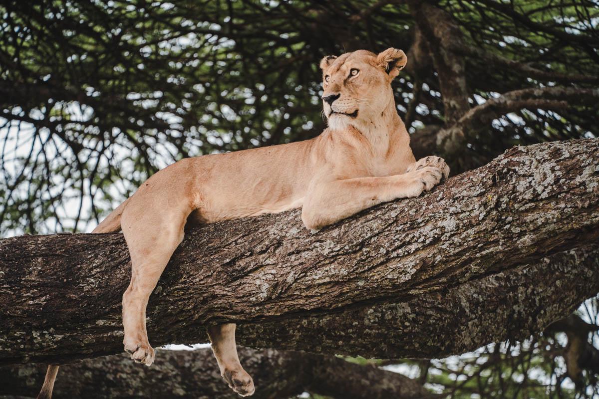 Tag 9 - Schläfrige Löwen 5