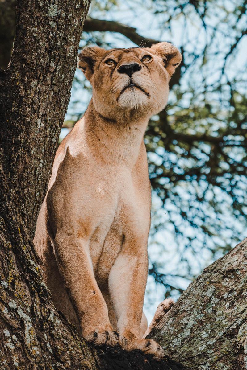 Tag 9 - Schläfrige Löwen 7